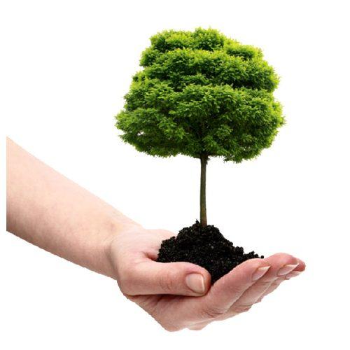 درختکاری با نام شما